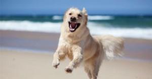 cani in spiaggia a Jesolo