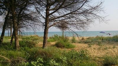 Bibione vegetazione e spiaggia