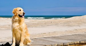 cane al mare jesolo